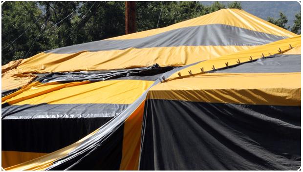 Termite Tent